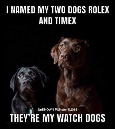 watch dogs.jpeg