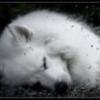 witchywolf